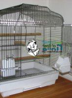 כלובי ציפורים ותוכים קטנים